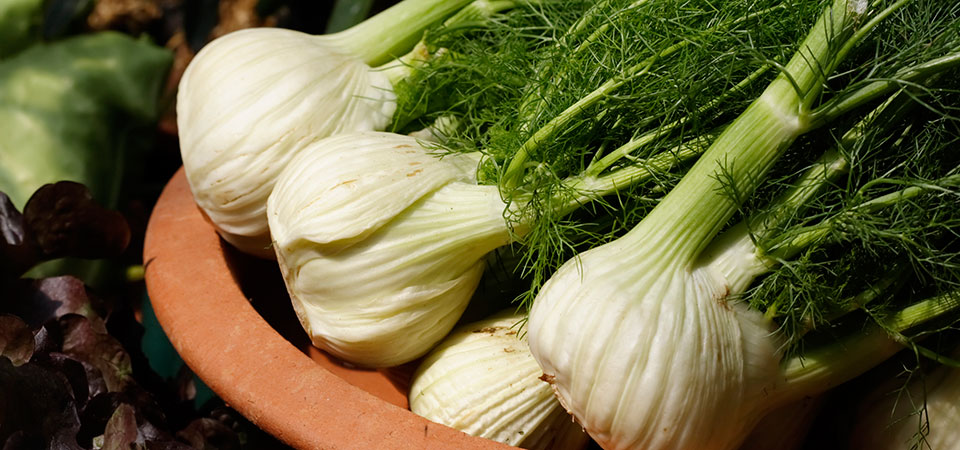All You Need To Know: Fennel