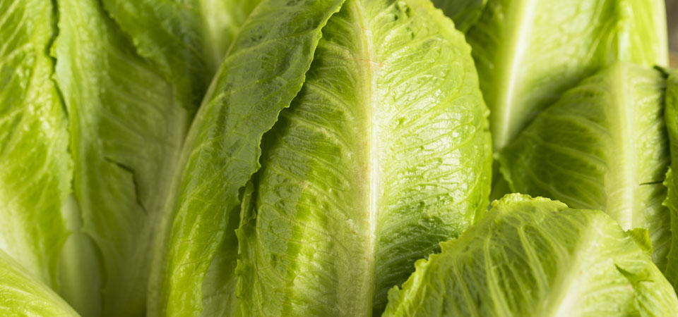 All You Need To Know: Romaine Hearts