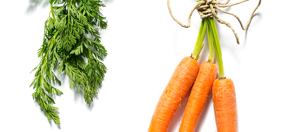 All You Need To Know: Carrots